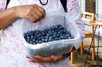 blueberry_1kg.JPG