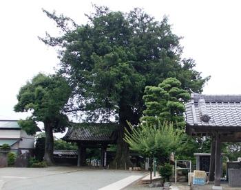 souseiji_kayanoki.JPG